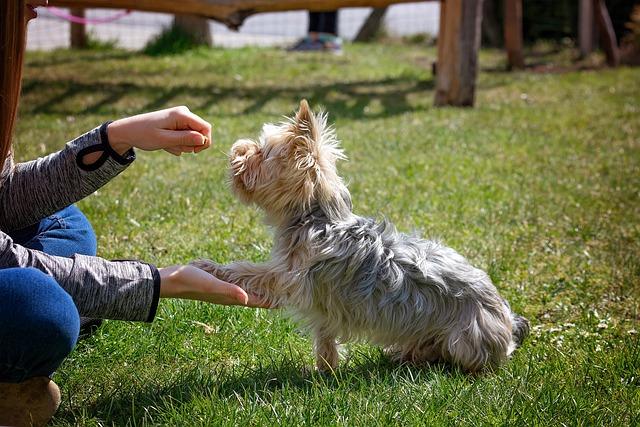 Hunde-training